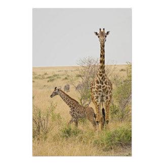 Maasai Giraffes roaming across the Maasai Mara Photo