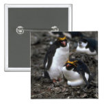 Macaroni Penguins - Pair At Nest Buttons