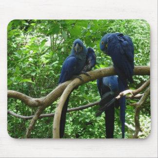 Macaw Birds Mousepad
