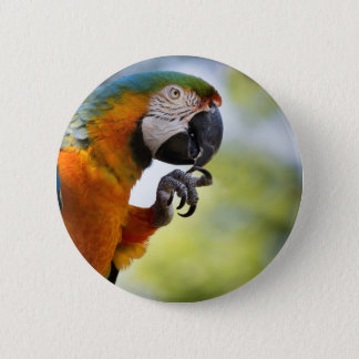 macaw button