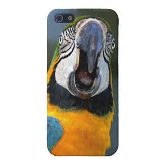 Macaw Covers For iPhone 5