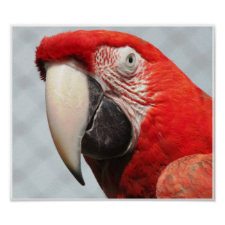 Macaw Face Photograph Poster