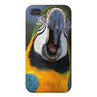 Macaw iPhone Cover iPhone 4 Cases