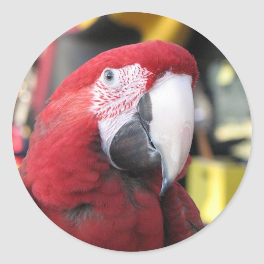 Macaw large sticker