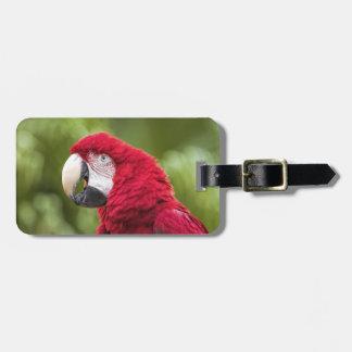Macaw Luggage Tag