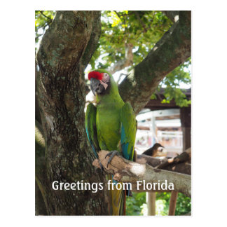 macaw or parrot postcard