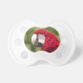 Macaw Pacifier