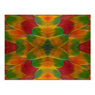Macaw parrot feather kaleidoscope postcard