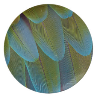 Macaw parrot feather pattern detail plate
