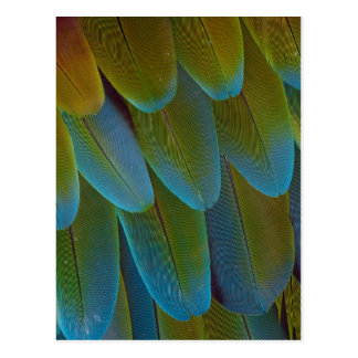 Macaw parrot feather pattern detail postcard