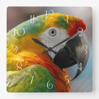 Macaw Parrot Square Wall Clock