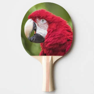 Macaw Ping Pong Paddle