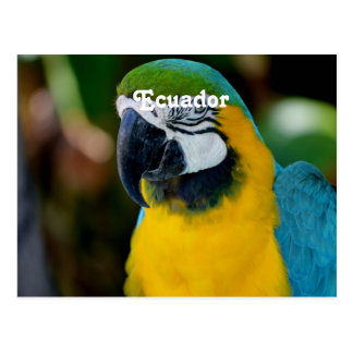Macaw Post Cards