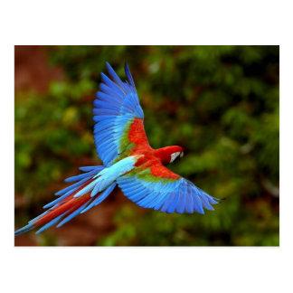 Macaw postcard 2