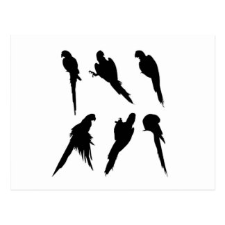 Macaw Silhouette Set Postcard