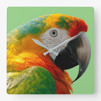 Macaw Square Wall Clock