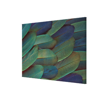 Macaw Wing Feather Pattern Canvas Print