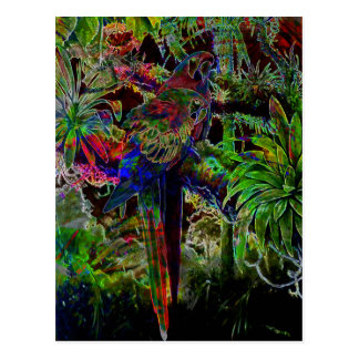 Macaws In Tropical Paradise At Night Postcard