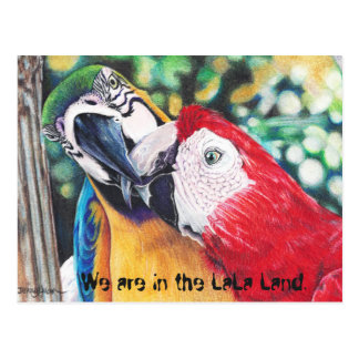 Macaws post card