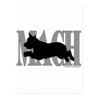 MACH Giant Schnauzer Postcard