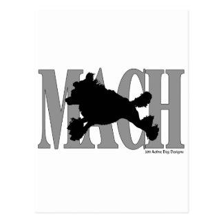 MACH Poodle Postcard