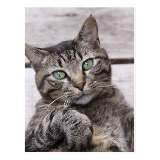 Mackerel Tabby Cat Postcard