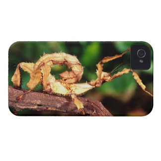Macleay's Spectre (Spiney Stick Insect), iPhone 4 Case-Mate Cases