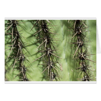 macro close up of cactus thorns card