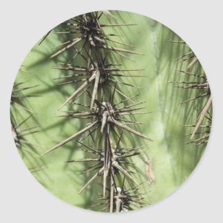 macro close up of cactus thorns classic round sticker