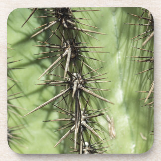 macro close up of cactus thorns coaster