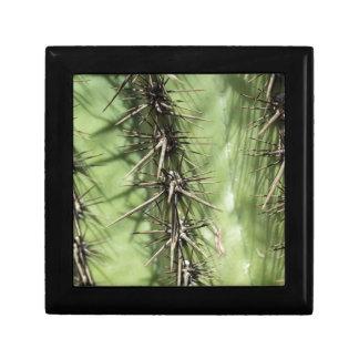 macro close up of cactus thorns gift box