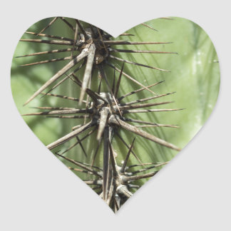 macro close up of cactus thorns heart sticker