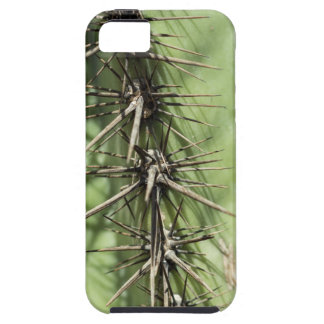 macro close up of cactus thorns iPhone 5 cover