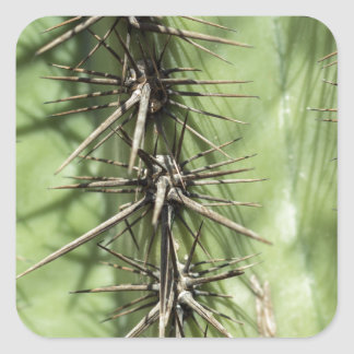 macro close up of cactus thorns square sticker