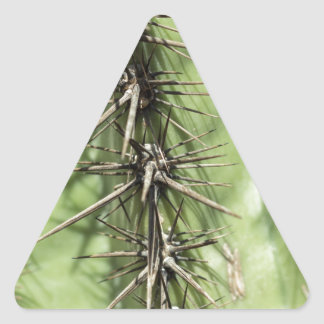 macro close up of cactus thorns triangle sticker