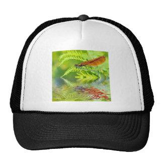 Macro damselfly on fern above water mesh hats