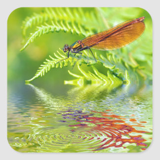 Macro damselfly on fern above water square sticker