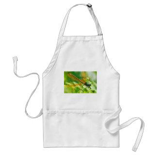 Macro damselfly on fern aprons