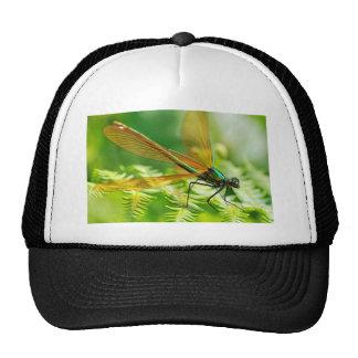 Macro damselfly on fern trucker hats