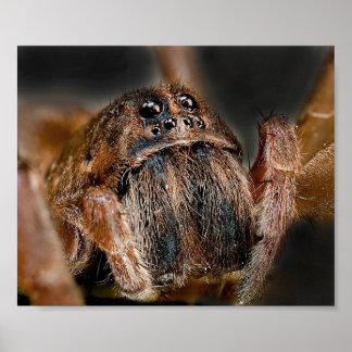 Macro d'araignée affiches
