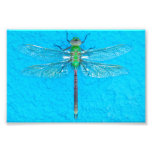Macro Green Dragonfly on Blue Background Photograph