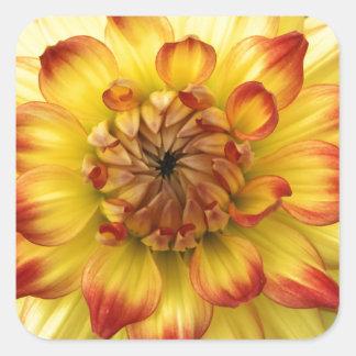 Macro heart of a dahlia flower square sticker