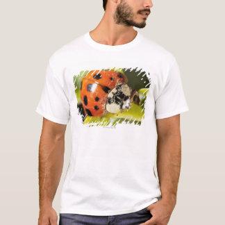 Macro; Horizontal; Colour; Color; Nobody 2 T-Shirt