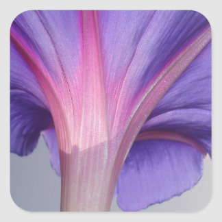 Macro of a Pale Liliac and Pink Morning Glory Square Sticker