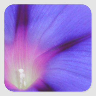 Macro of A Royal Purple Ipomoea Flower Square Sticker