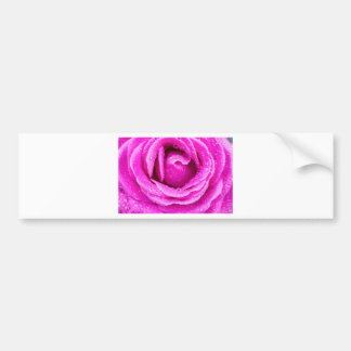 Macro of pink rose with water drops bumper sticker