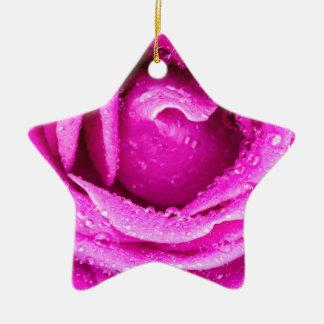 Macro of pink rose with water drops ceramic star ornament