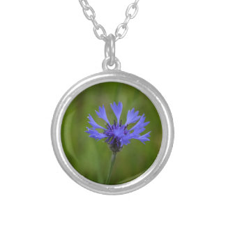 Macro photo of a cornflower (Centaurea cyanus) Silver Plated Necklace