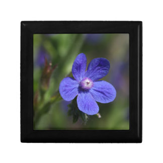 Macro photo of an Italian Bugloss Keepsake Box