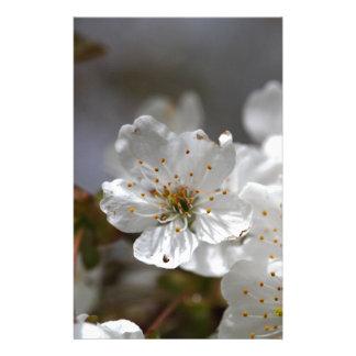 macro photo of cherry flowers stationery